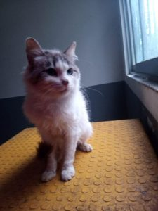 Centro de bienestar animal busca hogar para 19 animales de compañía